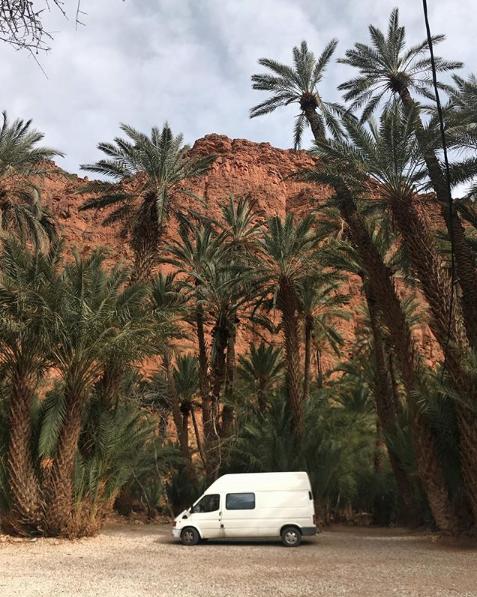 Female Vanlifer - palm trees