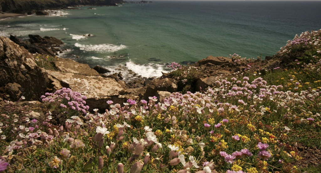 There might not be many lizards, but Lizard Peninsula has some of the rarest plants in Britain