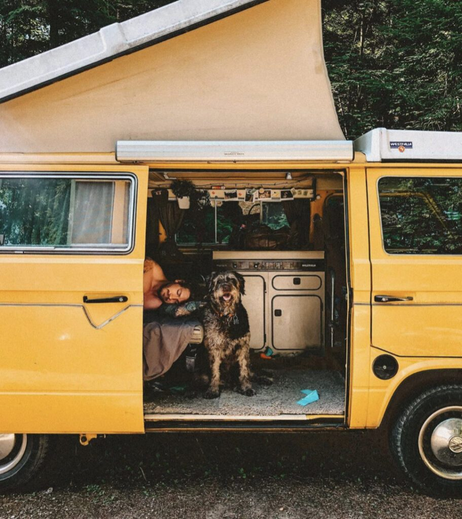 Camping with dogs - man and his dog in yellow pop up westfalia